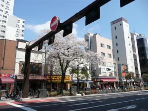 人形町交差点にある桜