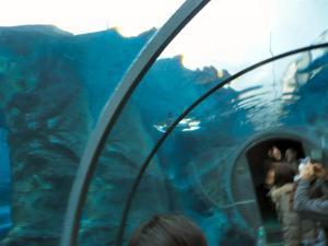 泳いでいるペンギンを下から見られる