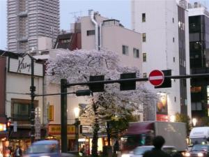 人形町交差点の桜が満開
