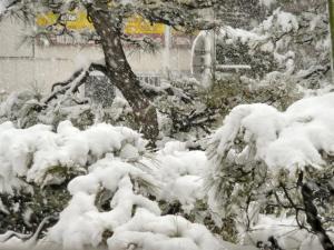 都内は大雪