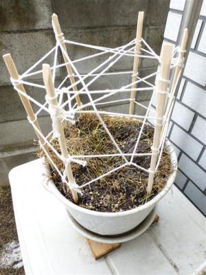 茎も葉っぱも食べられたブラッククローバー