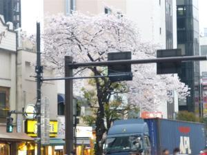 人形町交差点の桜