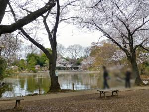 善福寺公園で花見