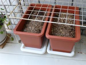 鉢を植え替え