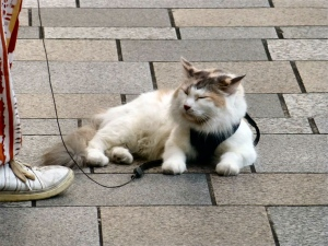表参道でみた猫