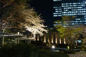 東京駅近くでの夜桜