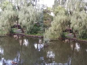 石神井公園を散歩
