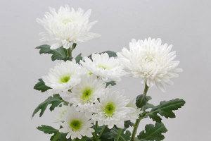 無料写真素材フリー「花ざかりの森」